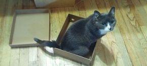 Cat Sitting & Pet Sitting IN NYC